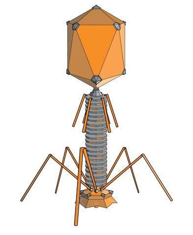 Rappresentazione di un virus batteriofago