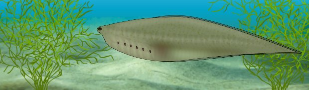 Concetto artistico di Metaspriggina che nuota vicino a colonie di cianobatteri Maripolia