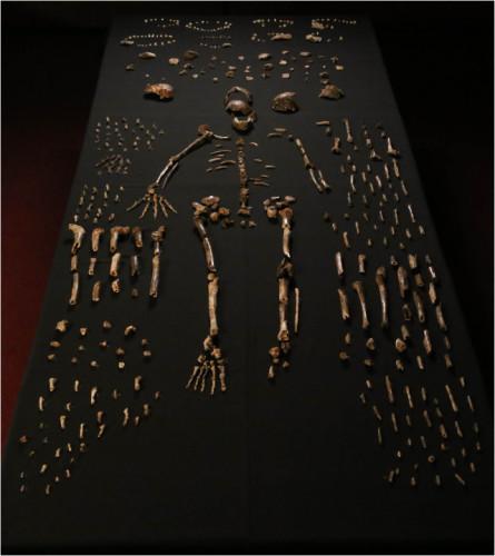 Una parte delle ossa di Homo naledi recuperate (Foto Lee Berger e altri)