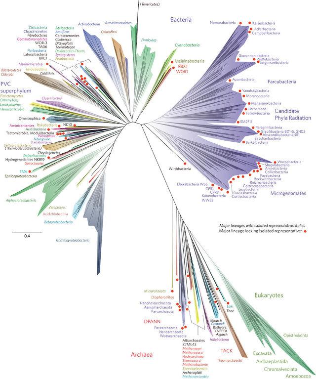 L'albero della vita (Immagine Laura Hug et al.)