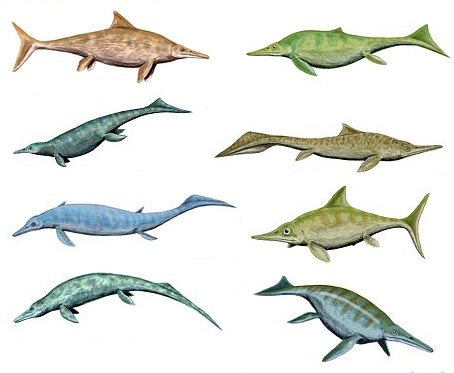 Ricostruzione di vari ittiosauri