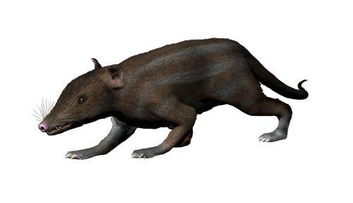 Ricostruzione di un mammifero del genere Juramaia, il più antico tra gli Euteri
