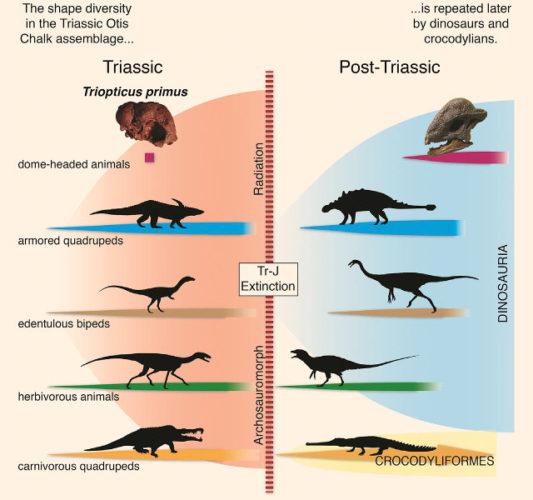 Schema di convergenze evolutive (Immagine cortesia Michelle Stocker et al.)