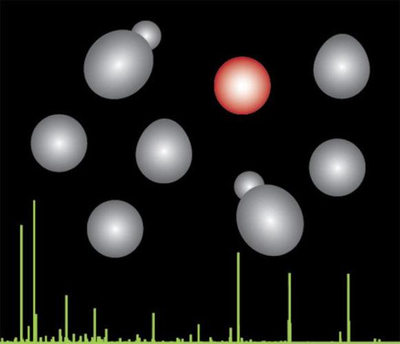 L'evoluzione di lieviti (in grigio e rosso) con la spettrometria di massa in verde (Immagine cortesia Villen Lab/University of Washington)