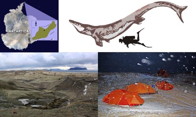L'area del ritrovamento del Kaikaifilu hervei, la sua ricostruzione e in basso l'area della spedizione (Immagine cortesia Università del Cile)