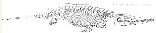 Diagramma di scheletro di Ichthyosaur communis del 1824
