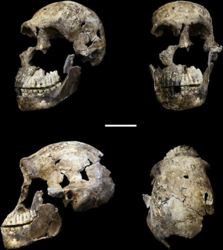 Il teschio dell'Homo naledi soprannominato Neo (Immagine cortesia John Hawks/University of Wisconsin-Madison/Wits University)