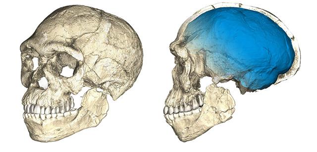 Ricostruzione tomografica di cranio di Jebel Irhoud (Immagine Philipp Gunz, MPI EVA Leipzig)