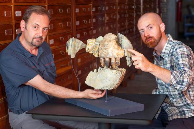 I paleontologi Cristiano Dal Sasso e Simone Maganuco con le ossa di Razanandrongobe sakalavae (Foto cortesia Giovanni Bindellini)