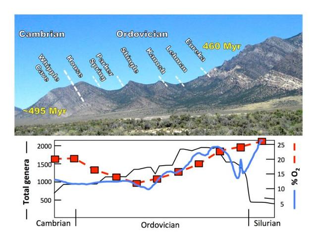 Aumento dell'ossigeno nella formazione Shingle Pass Limestone (Immagine cortesia Cole Edwards)