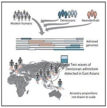 Commistioni genetiche