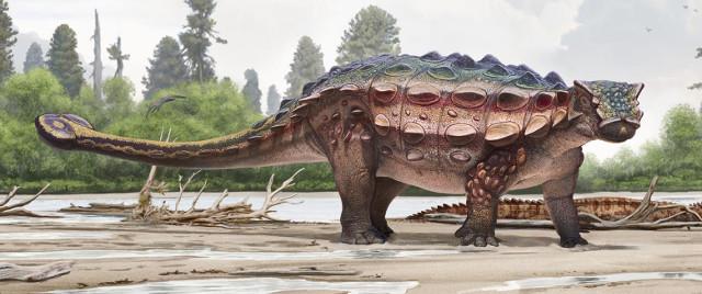 Ricostruzione di Akainacephalus johnsoni