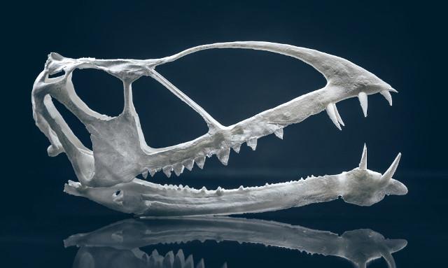 Modello 3D del teschio di Caelestiventus hanseni (Immagine cortesia Nate Edwards / Brigham Young University)