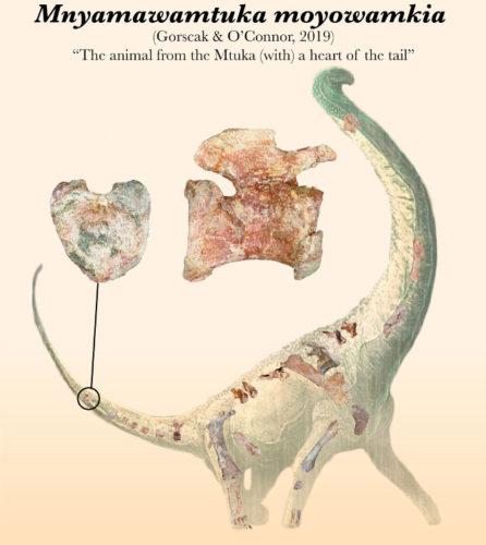 Il Mnyamawamtuka moyowamkia era un titanosauro che visse nell'odierna Tanzania 100 milioni di anni fa