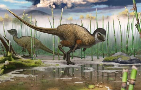 Nuovi indizi che il piumaggio ebbe origine almeno 250 milioni di anni fa