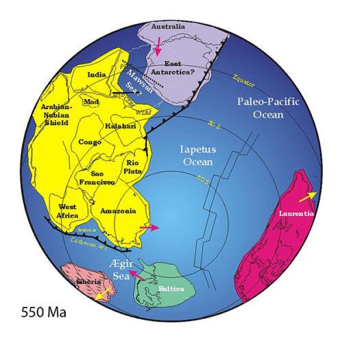 Forse l'esplosione del Cambriano avvenne grazie a una particolare attività tettonica