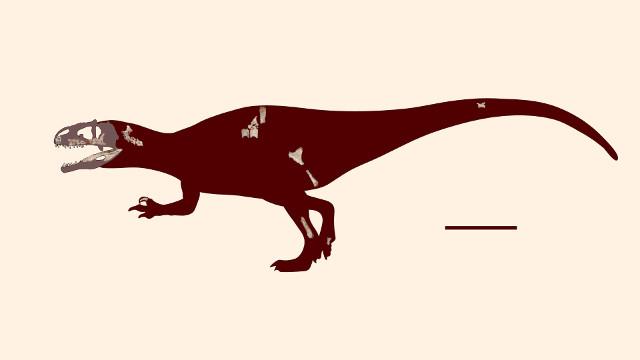 Ricostruzione di Siamraptor suwati con le ossa disponibili (Immagine cortesia Chokchaloemwong et al, doi: 10.1371/journal.pone.0222489)