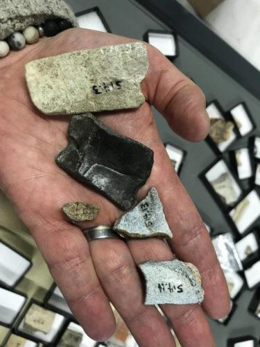 Denti fossili di 8-9 milioni di anni fa scoperti nello Yukon sono stati attribuiti a un antico rinoceronte