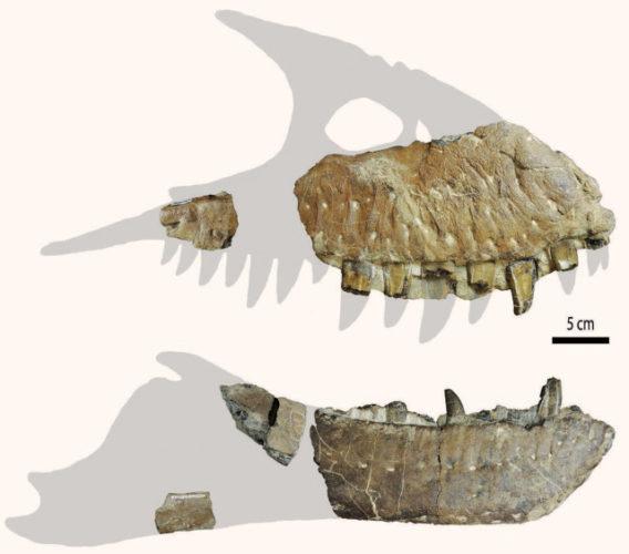 Ossa fossili di Thanatotheristes degrootorum