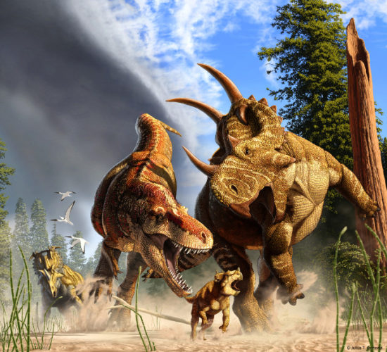 Daspletosaurus mentre caccia uno Spinops (Immagine cortesia Julius Csotonyi)