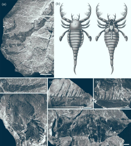 Fossili e disegni di Terropterus xiushanensis