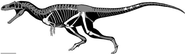 Ricostruzione del Gualicho shinyae con in bianco le ossa trovate (Immagine Sebastián Apesteguía et al.)