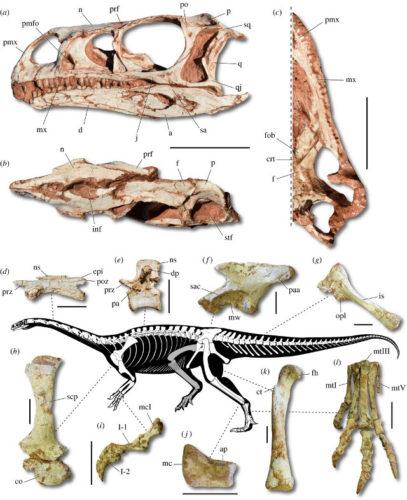 Il Macrocollum itaquii è il più antico dinosauro dal collo lungo scoperto finora
