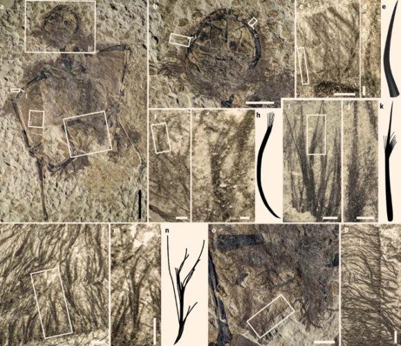 Picnofibre di pterosauri (Immagine cortesia Yang et al)