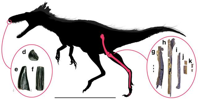 Il Moros intrepidus era un piccolo tirannosauro che visse 96 milioni di anni fa