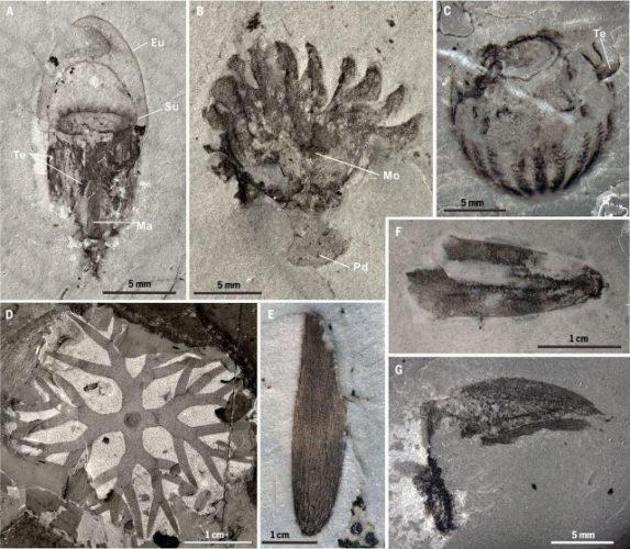 Un nuovo deposito di fossili di mezzo miliardo di anni fa conservati in modo straordinario è stato scoperto in Cina