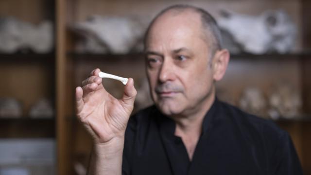 Il professor Philip Piper con il primo osso di Homo luzonensis scoperto (Foto cortesia Lannon Harley / ANU)