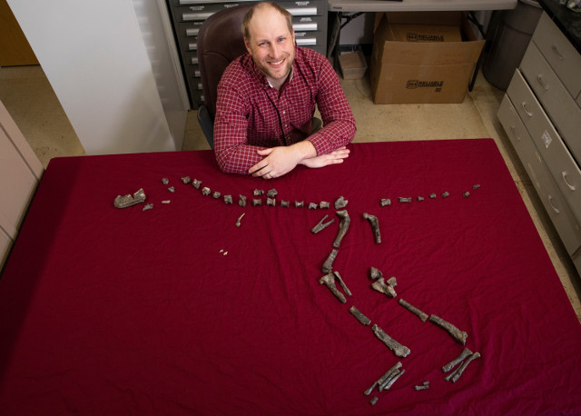 Sterling Nesbitt con le ossa di Suskityrannus hazelae da lui scoperte (Foto cortesia Virginia Tech)