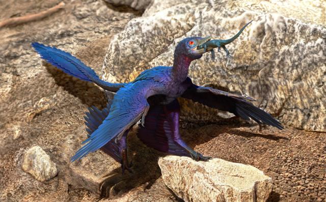 Concetto artistico di Microraptor zhaoianus che inghiotte un Indrasaurus wangi (Immagine cortesia Doyle Trankina)