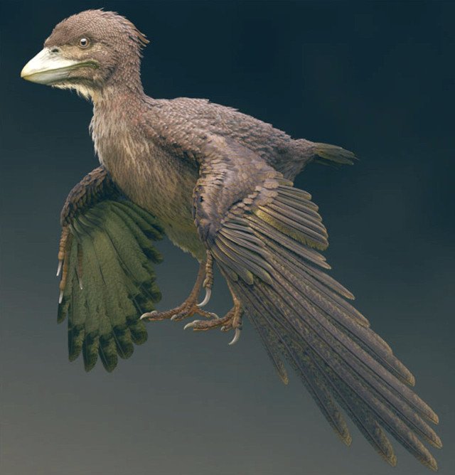 Ricostruzione artistica di Fukuipteryx prima (Immagine cortesia Masanori Yoshida)