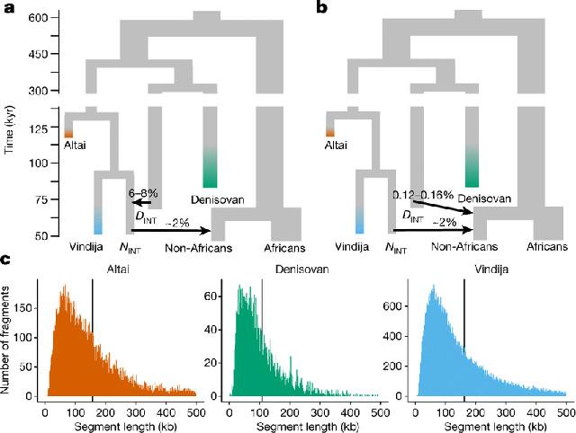 Parentele filogenetiche dei frammenti arcaici sequenziati degli islandesi