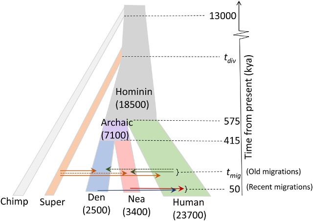 Il modello delle popolazioni utilizzato nella ricerca