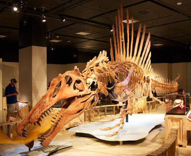 Scheletro di Spinosaurus aegyptiacus
