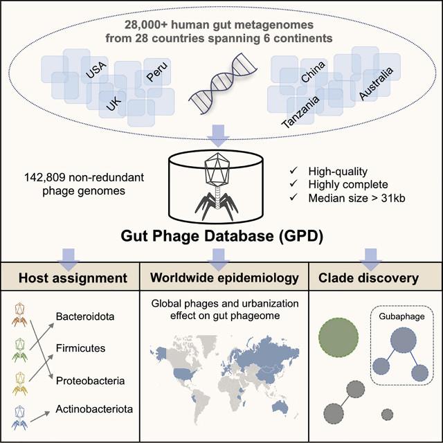 Illustrazione della diversità dei virus batteriofagi del microbioma intestinale umano