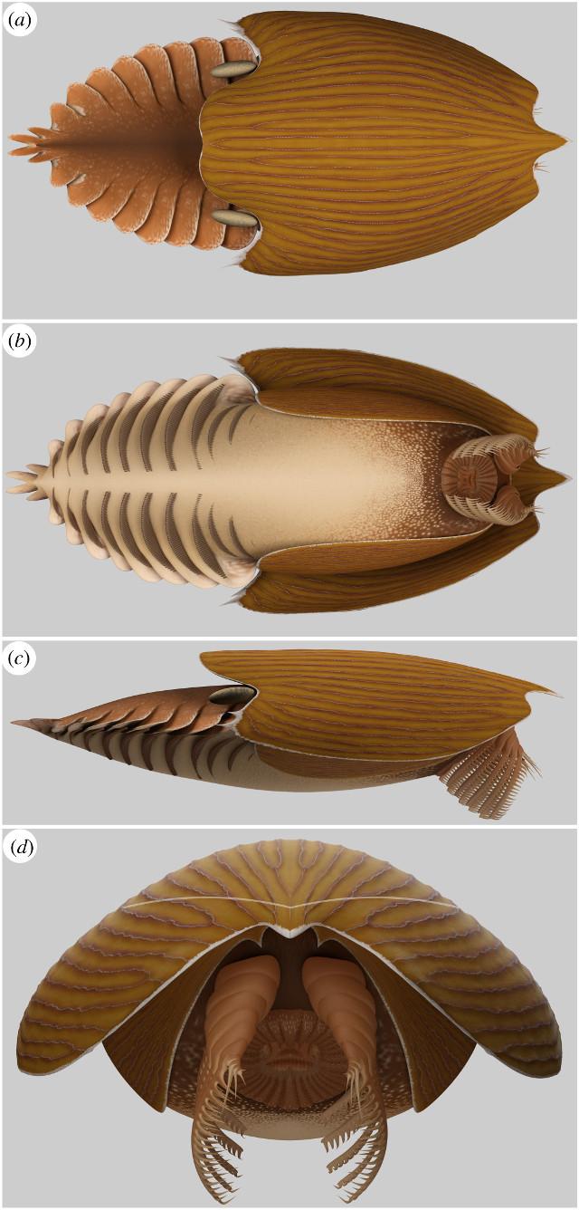 Ricostruzione del Titanokorys gainesi in varie viste